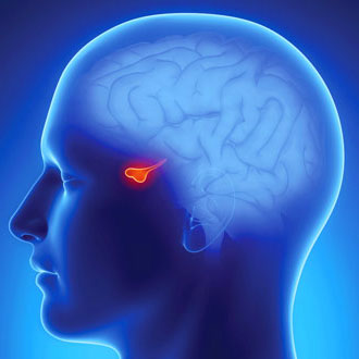 гипофиз головного мозга