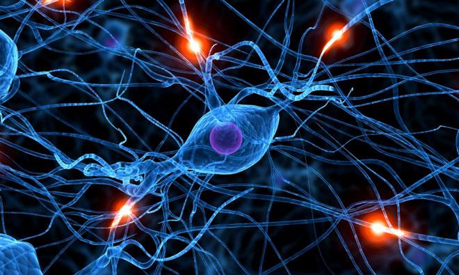 образование глиальных клеток