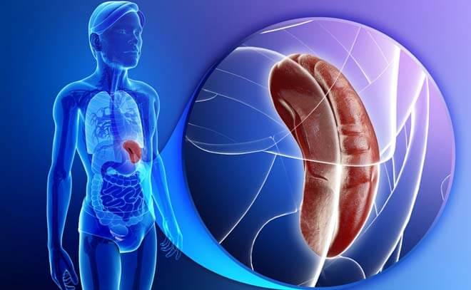 Киста селезенки: симптомы и причины